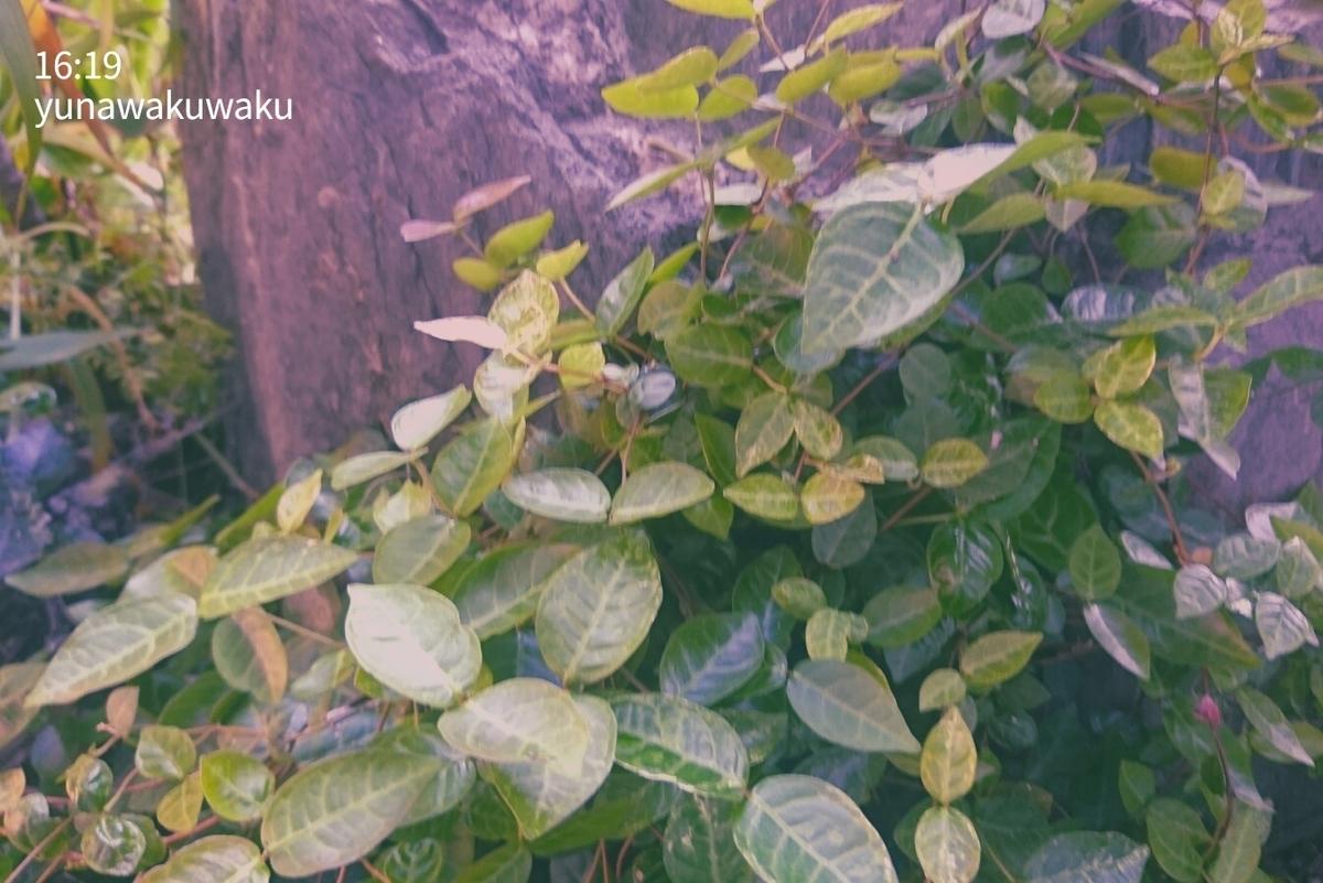 f:id:yunawakuwaku:20200514234424j:plain