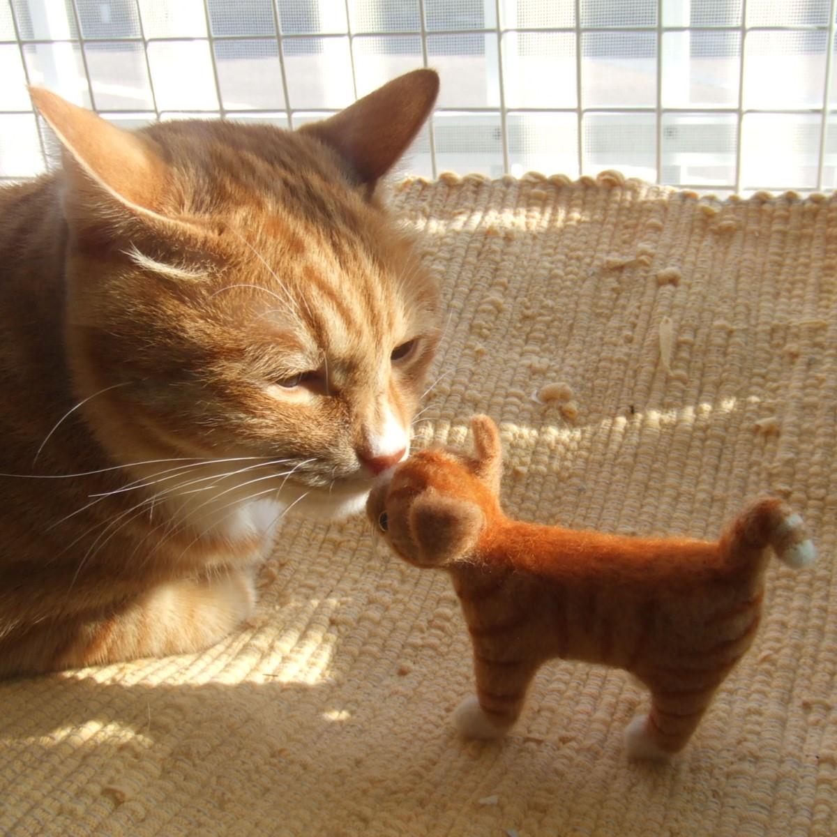 猫のまぁちゃん