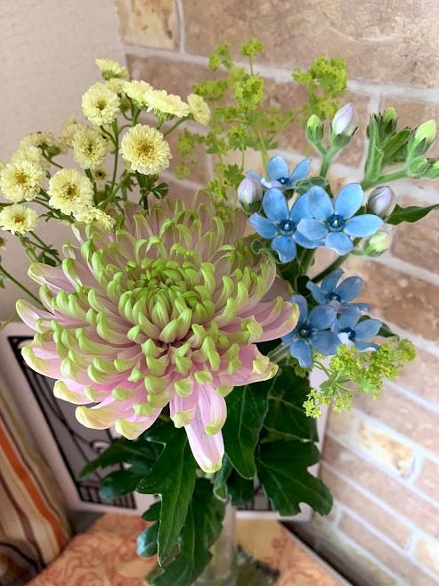 菊、ブルースター花束