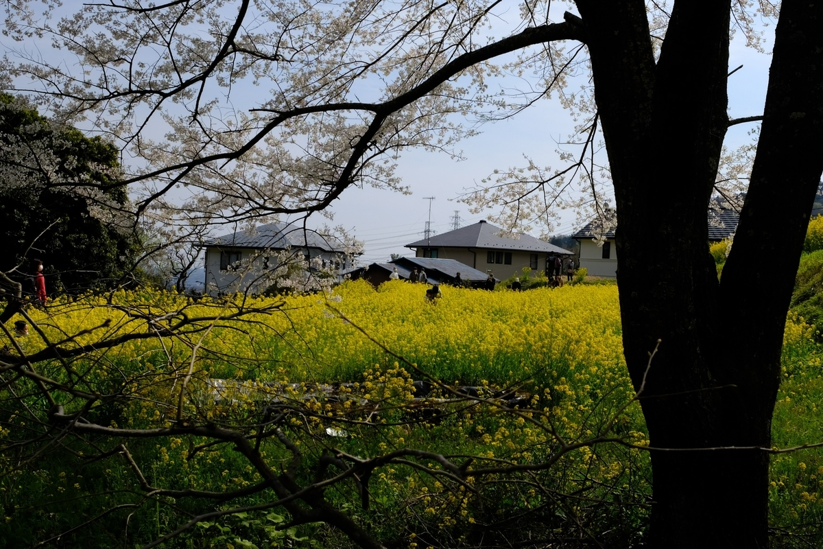 f:id:yurayura66:20210411161536j:plain