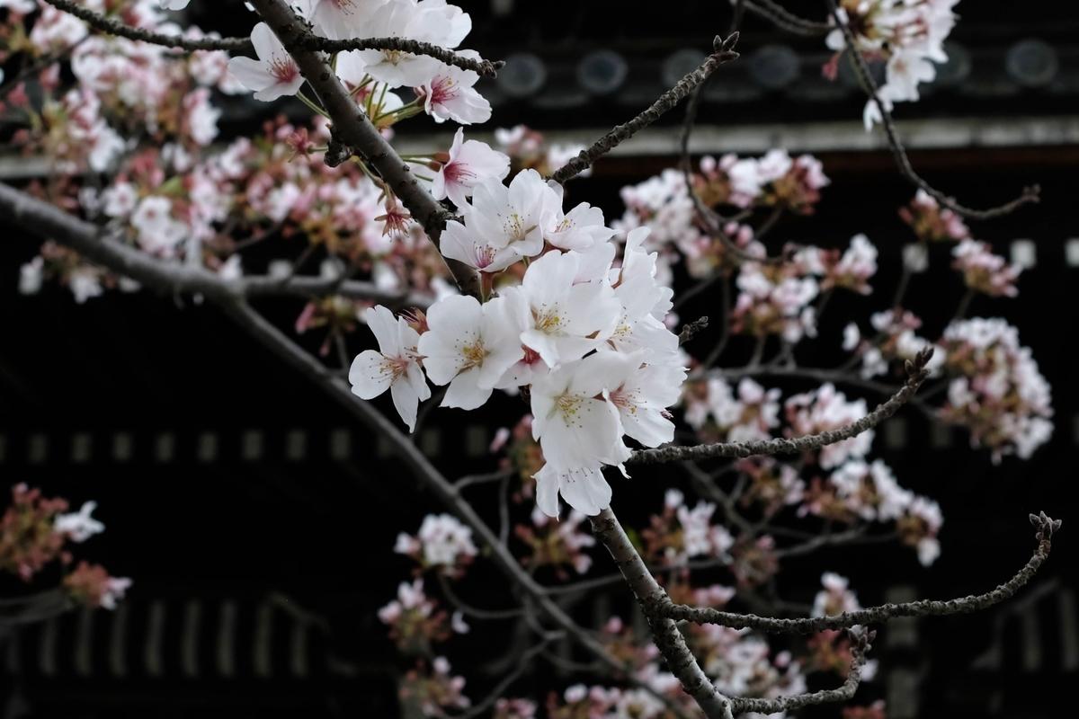 f:id:yurayura66:20210423074256j:plain