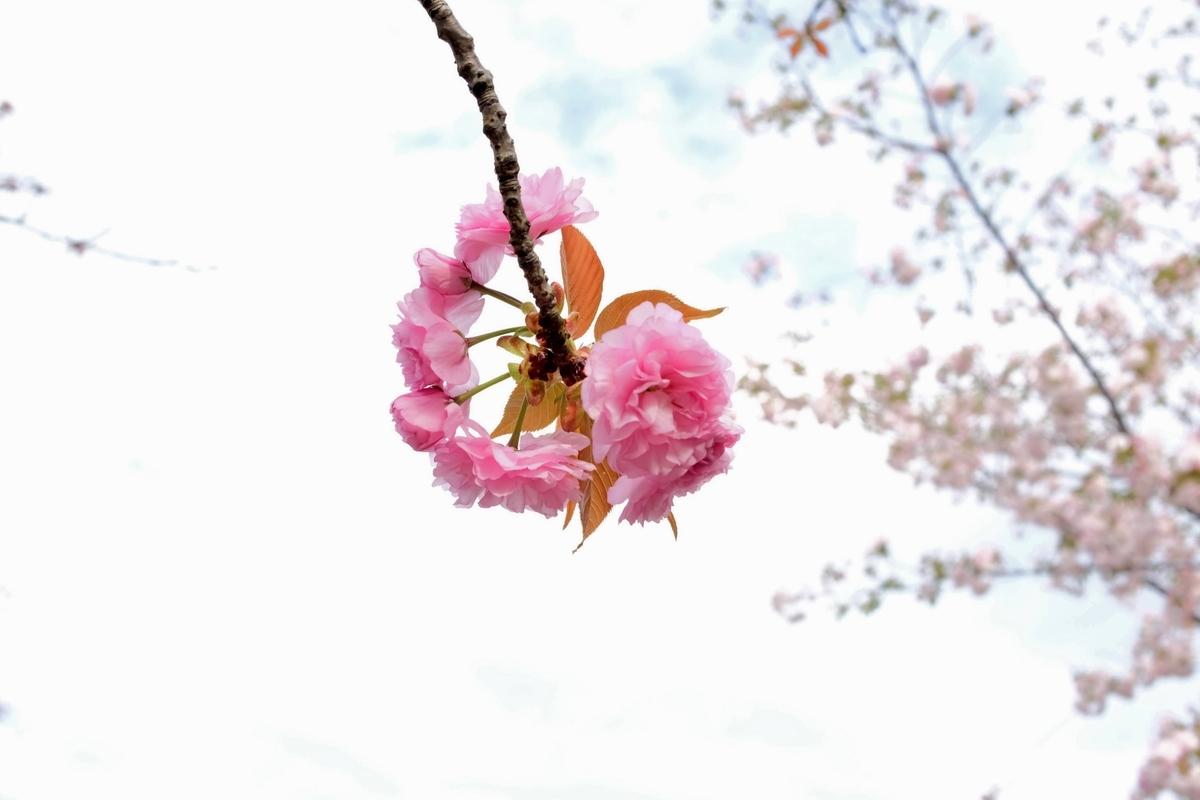 f:id:yurayura66:20210423074350j:plain