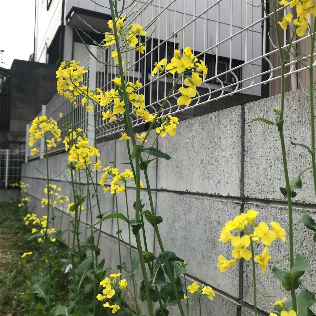 f:id:yuri-mami:20200122222739j:image