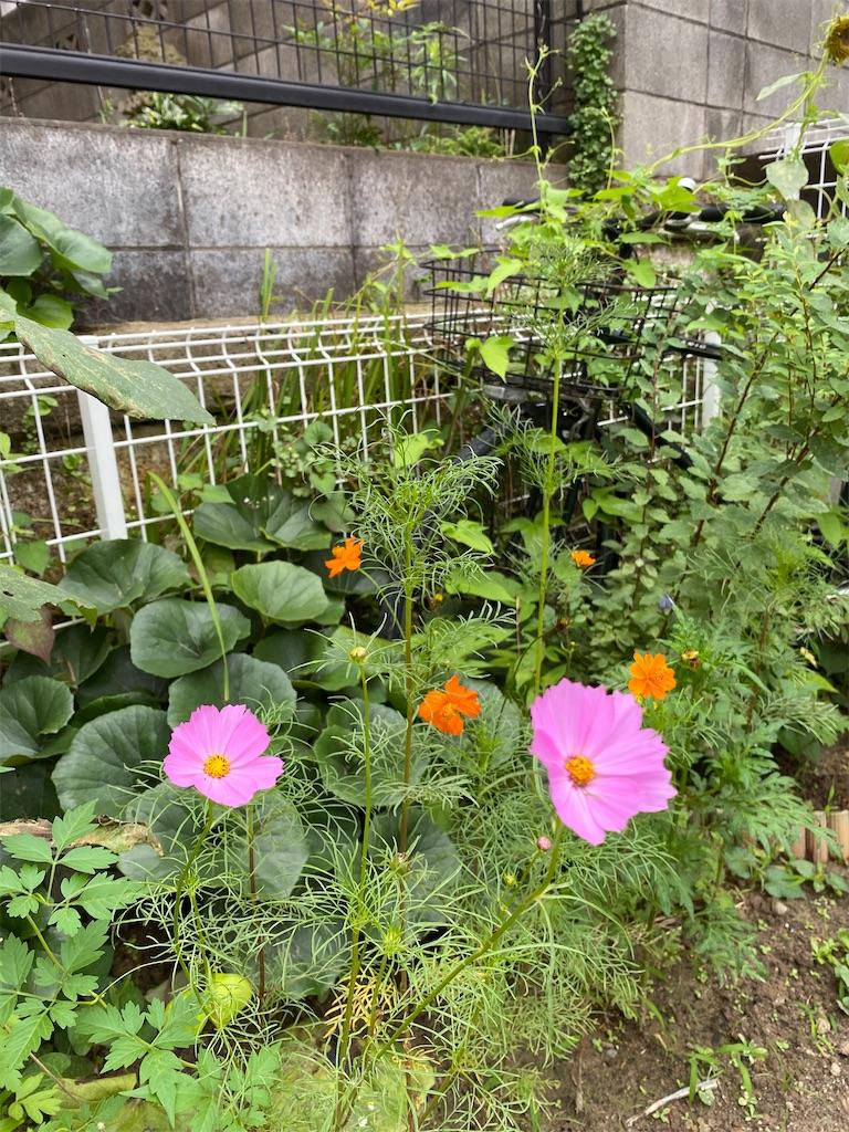 f:id:yuri-mami:20200809224349j:image