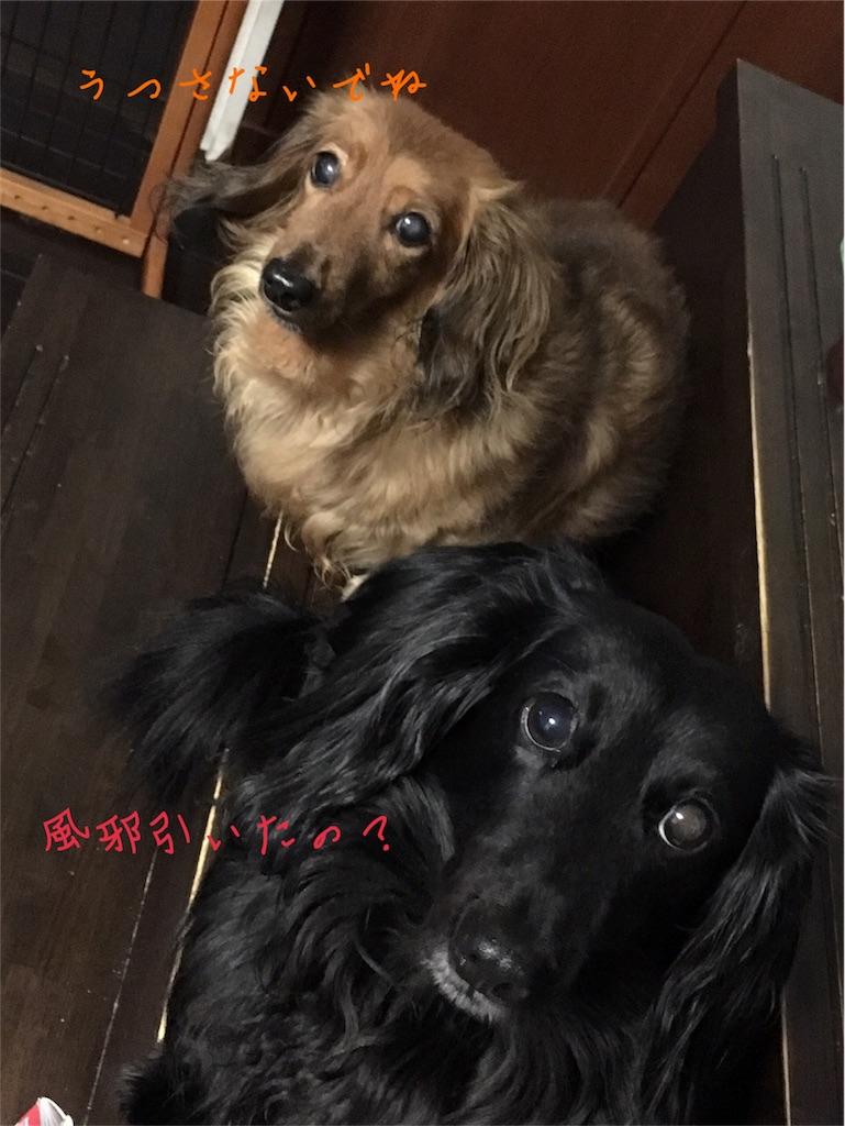f:id:yuri-yamaguchi-48625160:20171102204748j:image