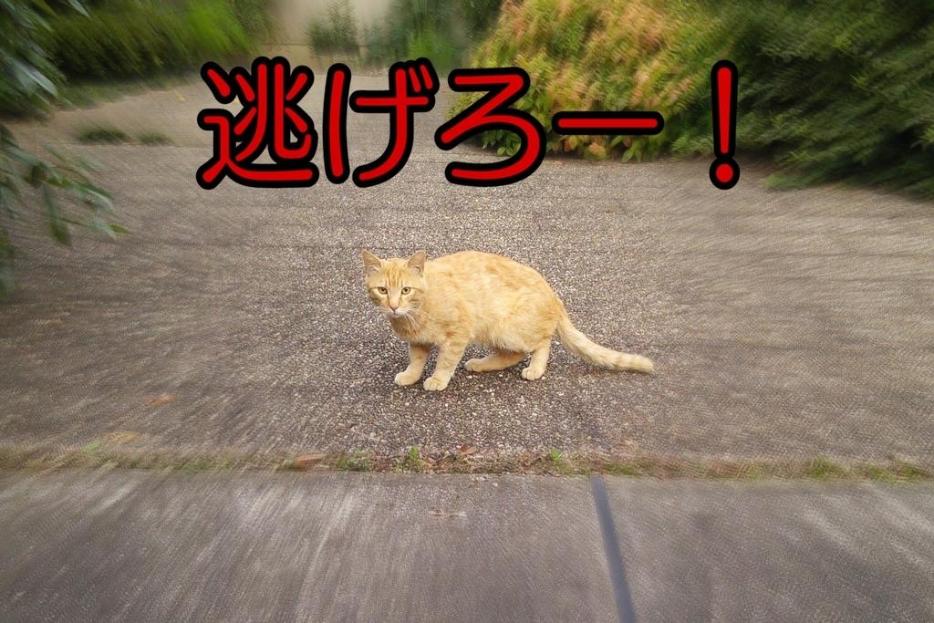f:id:yurihaka:20181118112010j:plain
