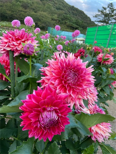 f:id:yurihonjo-kosodate:20211013105645j:image