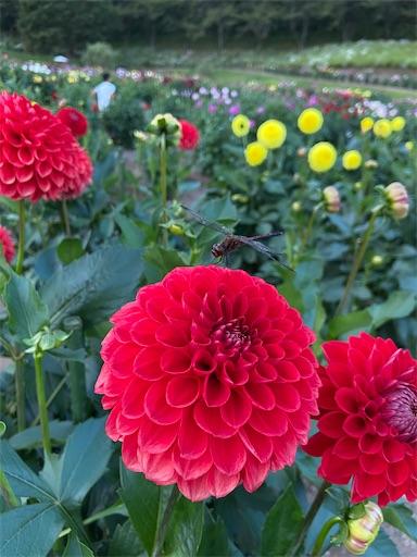 f:id:yurihonjo-kosodate:20211013112710j:image