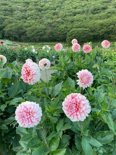 f:id:yurihonjo-kosodate:20211013112848j:plain