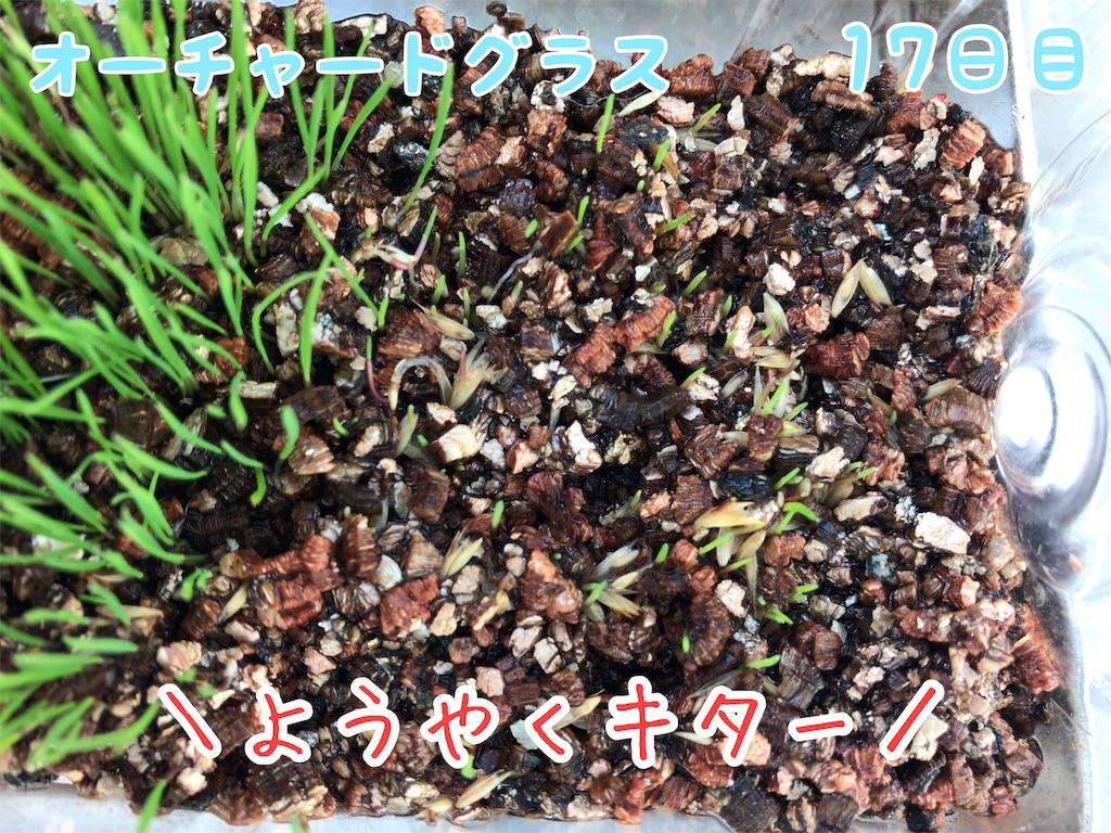 f:id:yurina12:20190118231609j:image:w300
