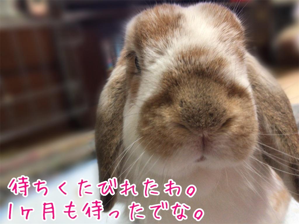f:id:yurina12:20190220233127j:image:w300