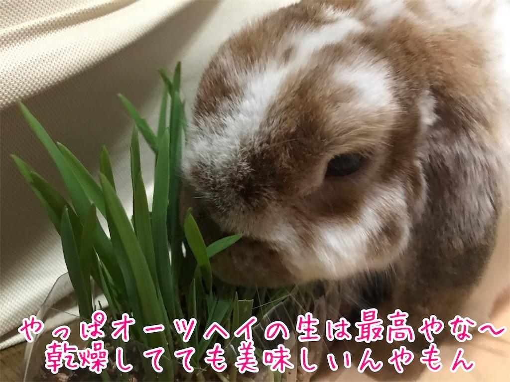 f:id:yurina12:20190220233132j:image:w300