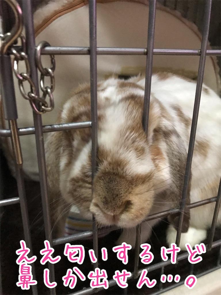 f:id:yurina12:20190220233136j:image:w300