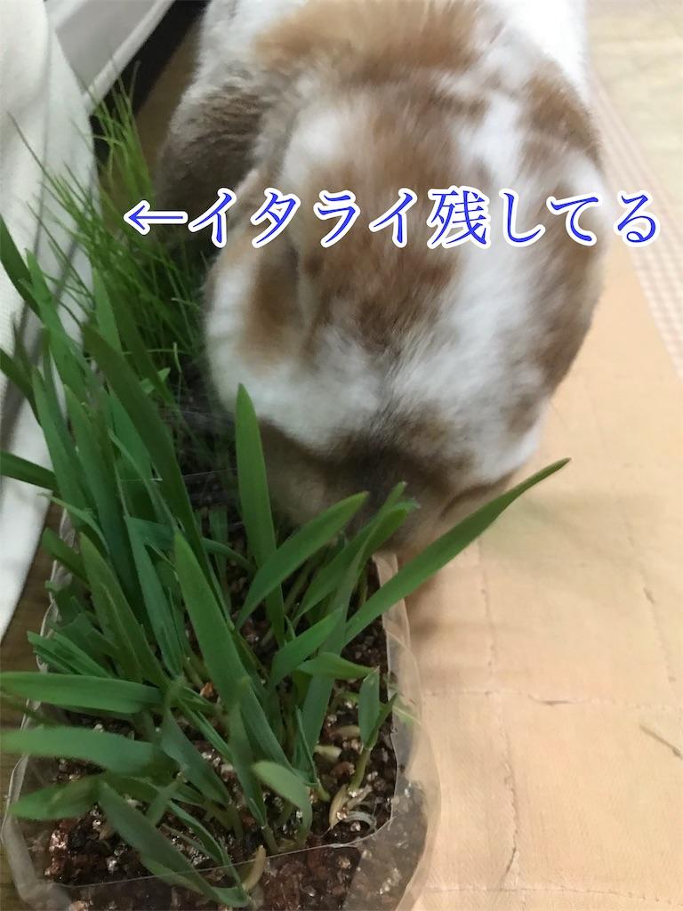 f:id:yurina12:20190220233139j:image:w300
