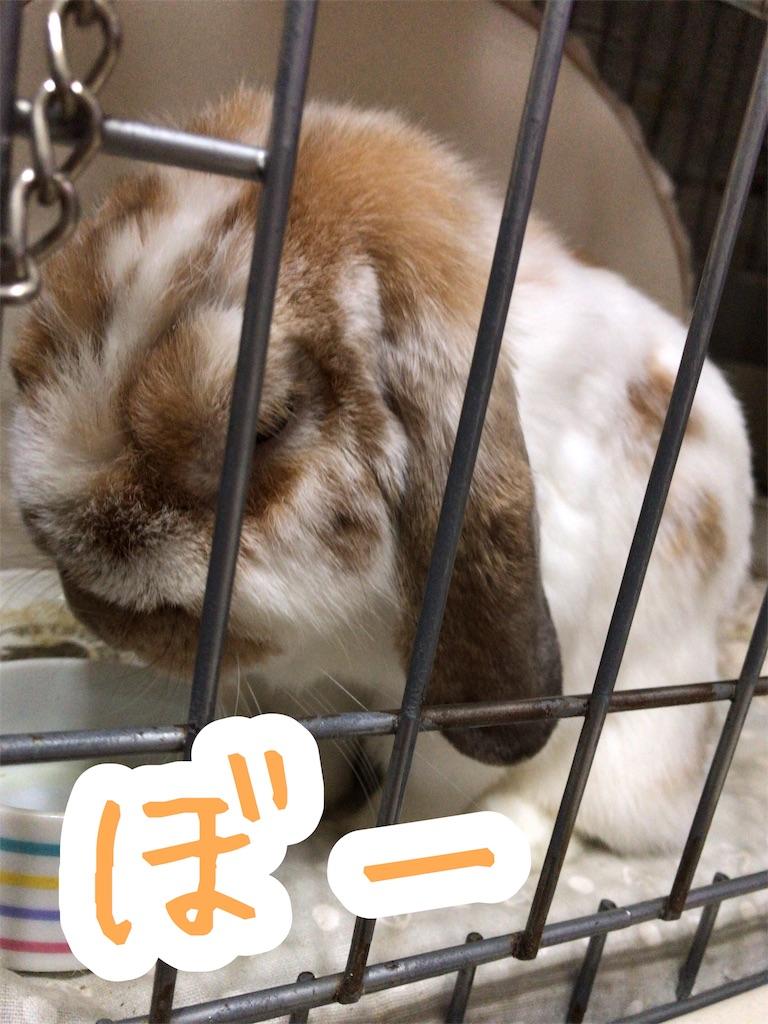 f:id:yurina12:20191123190611j:image