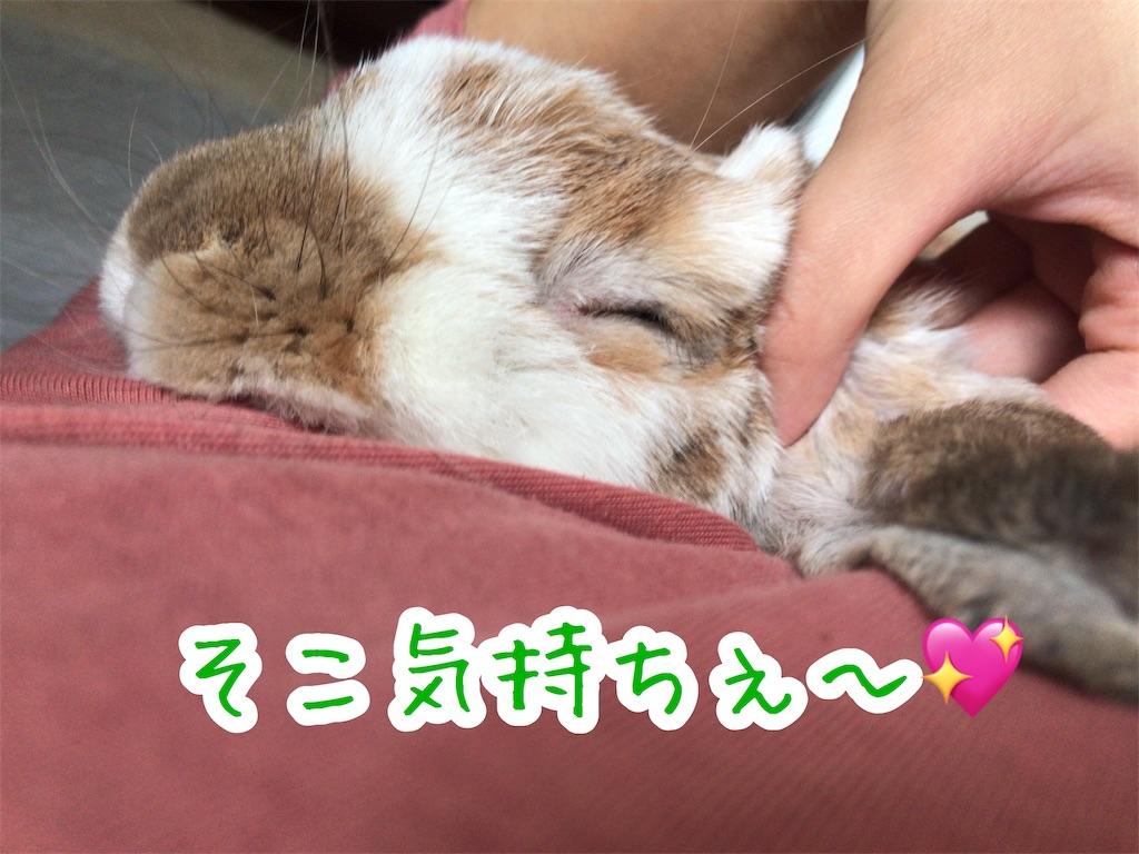 f:id:yurina12:20191125083741j:image