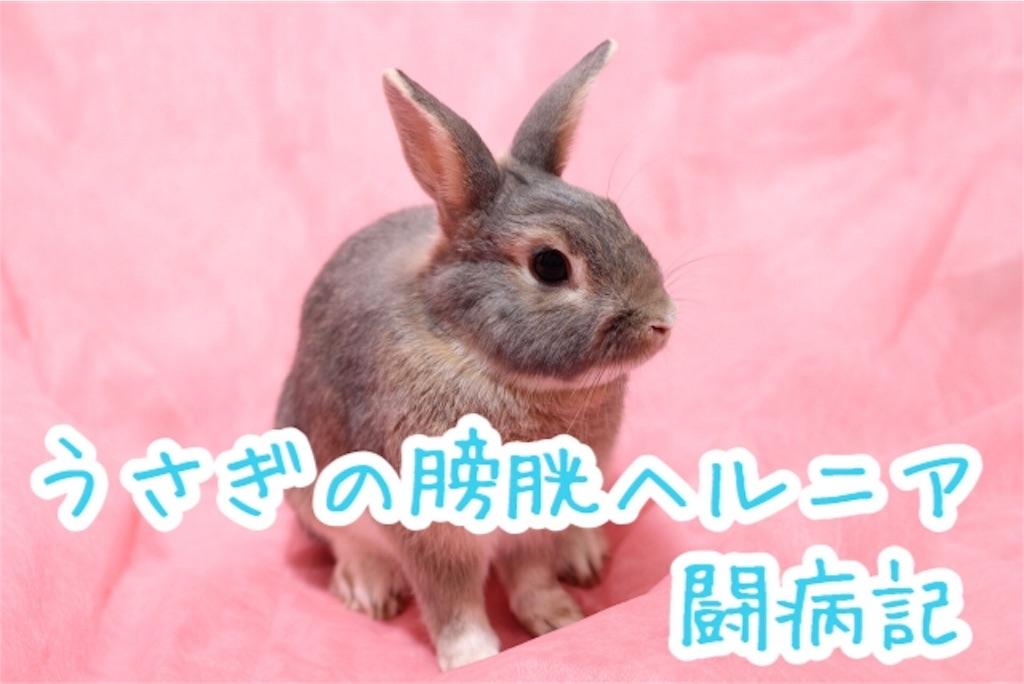 f:id:yurina12:20191125125405j:image