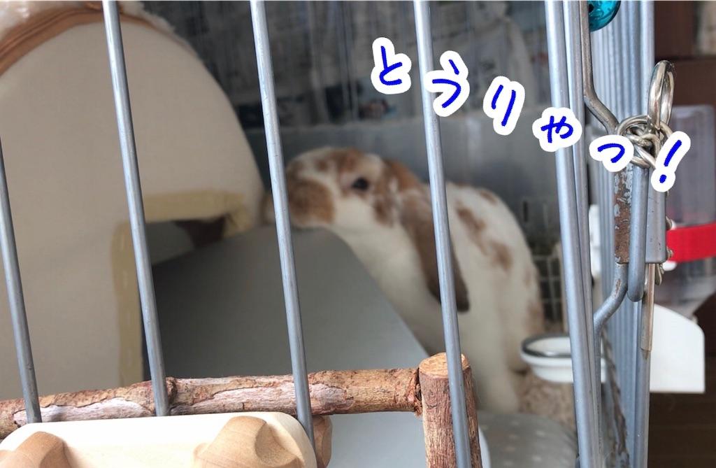 f:id:yurina12:20191126142825j:image:w350