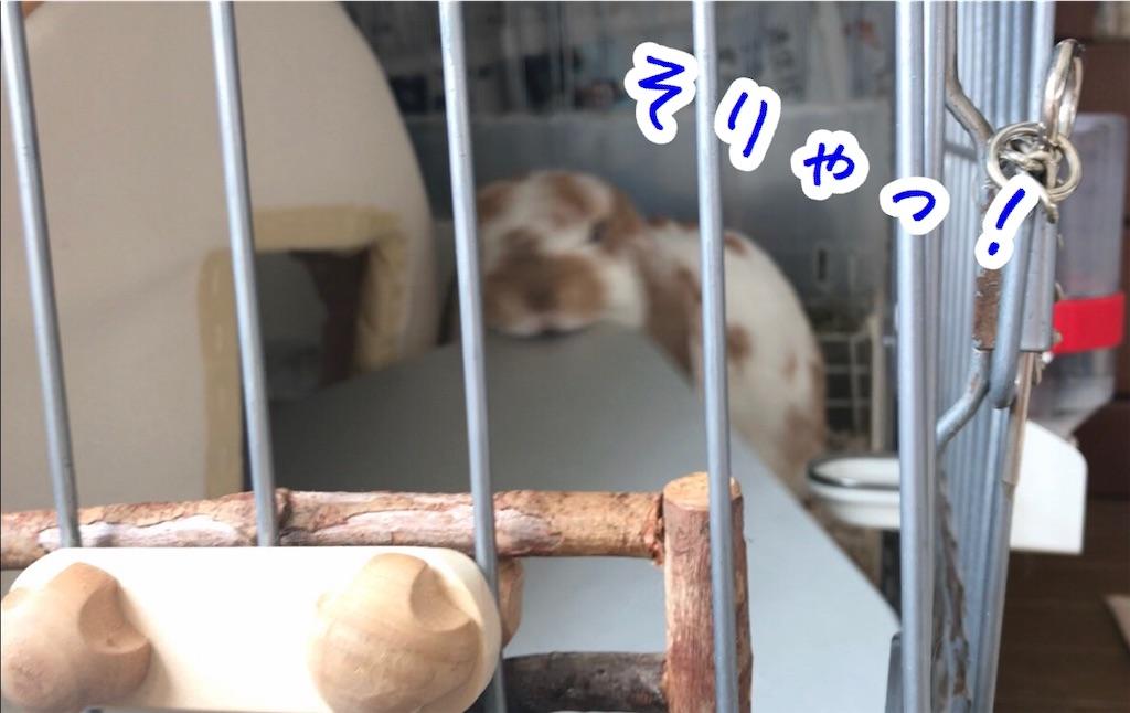 f:id:yurina12:20191126143013j:image:w350