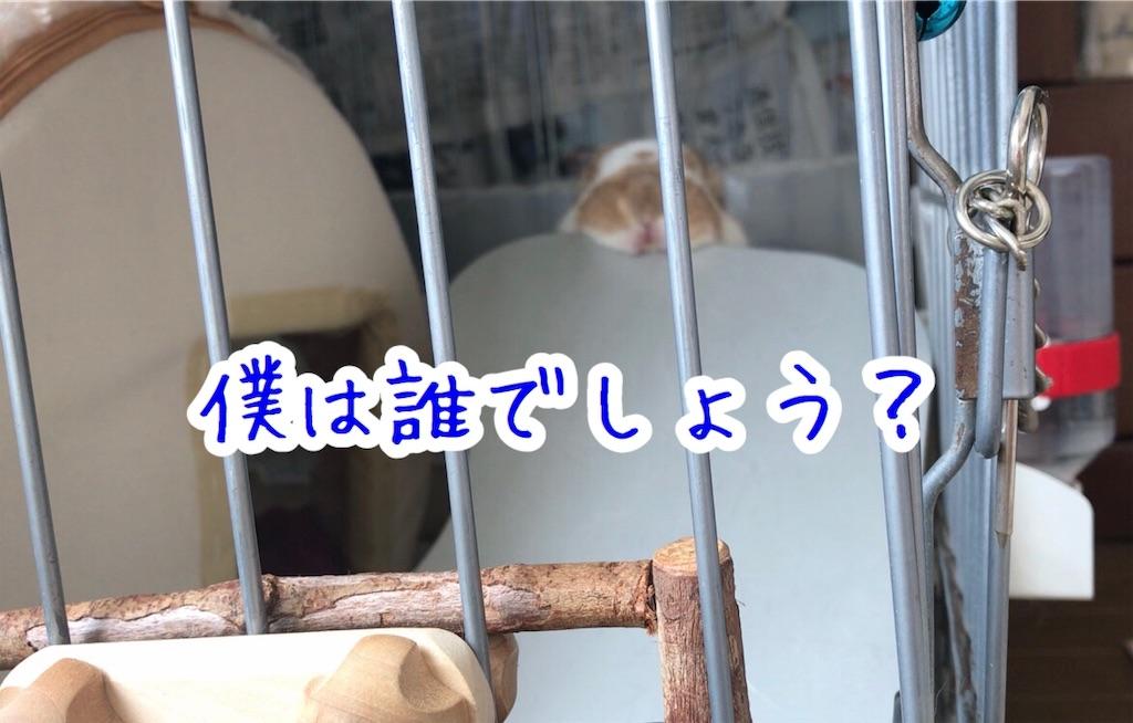 f:id:yurina12:20191126143202j:image:w350