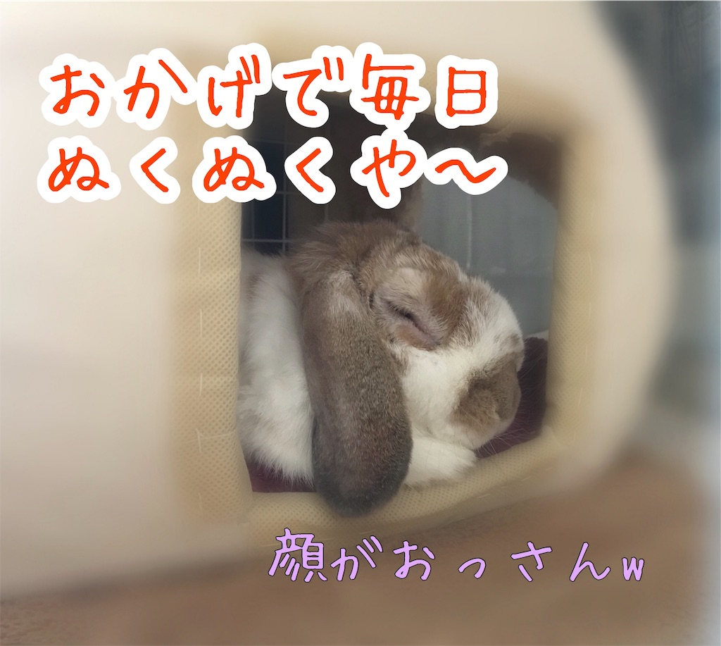 f:id:yurina12:20191127142940j:image