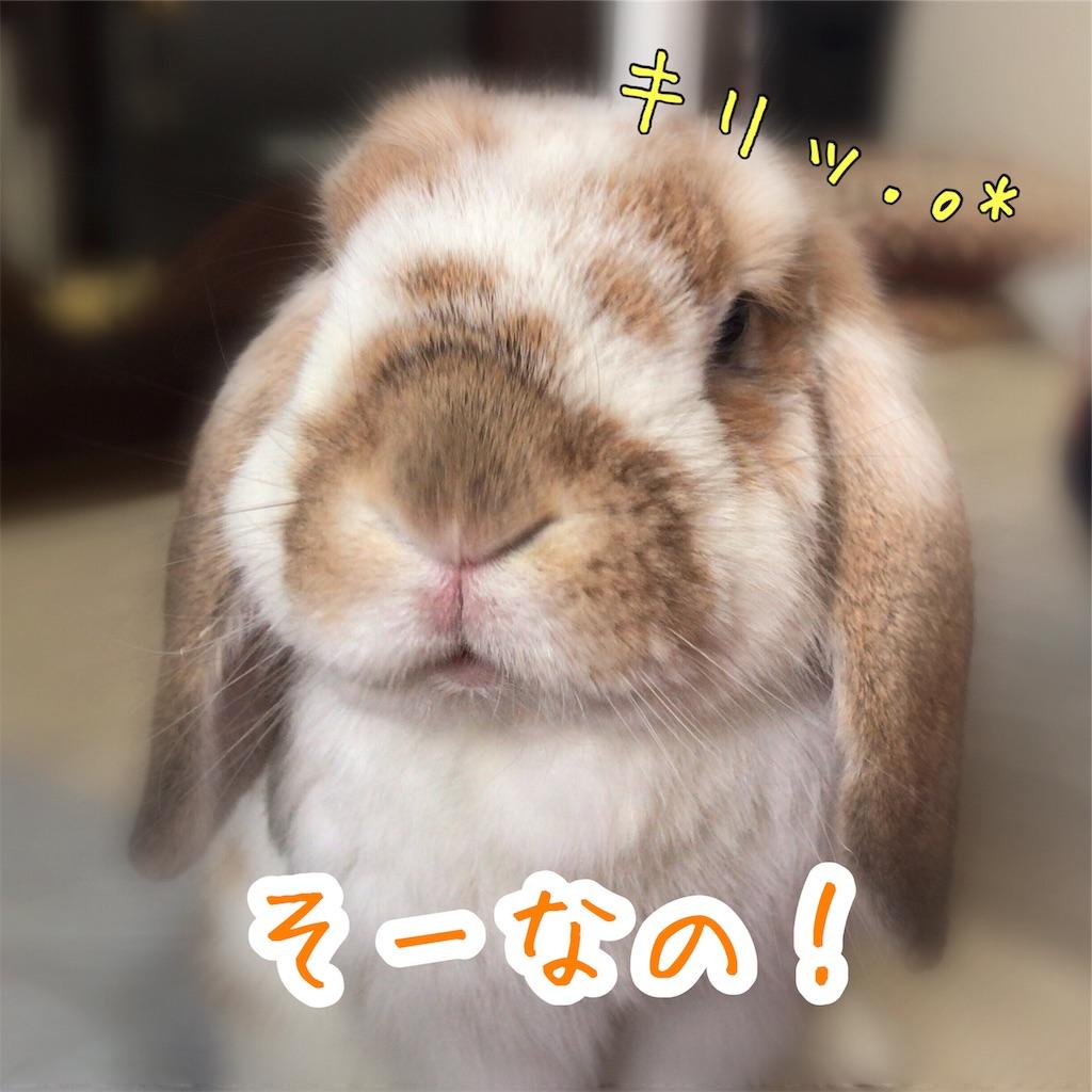 f:id:yurina12:20191128171254j:image