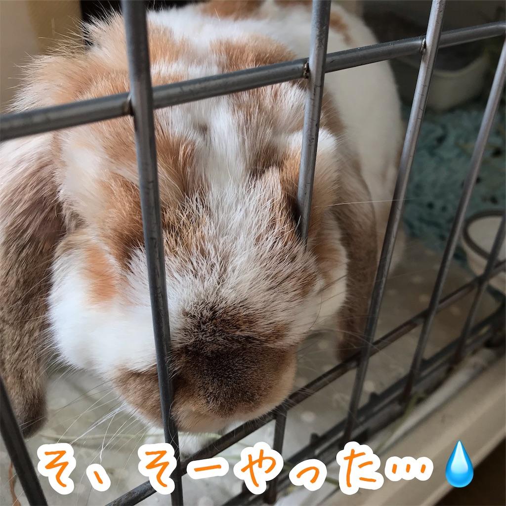 f:id:yurina12:20191128171553j:image