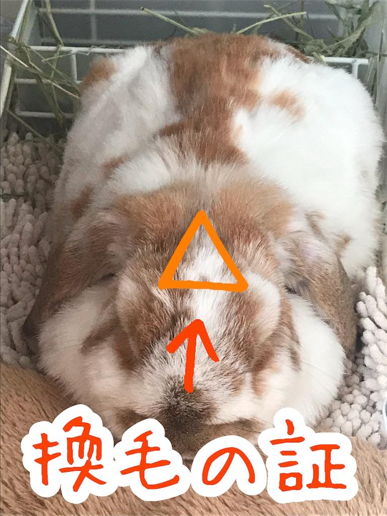 f:id:yurina12:20191204133413j:image:w300