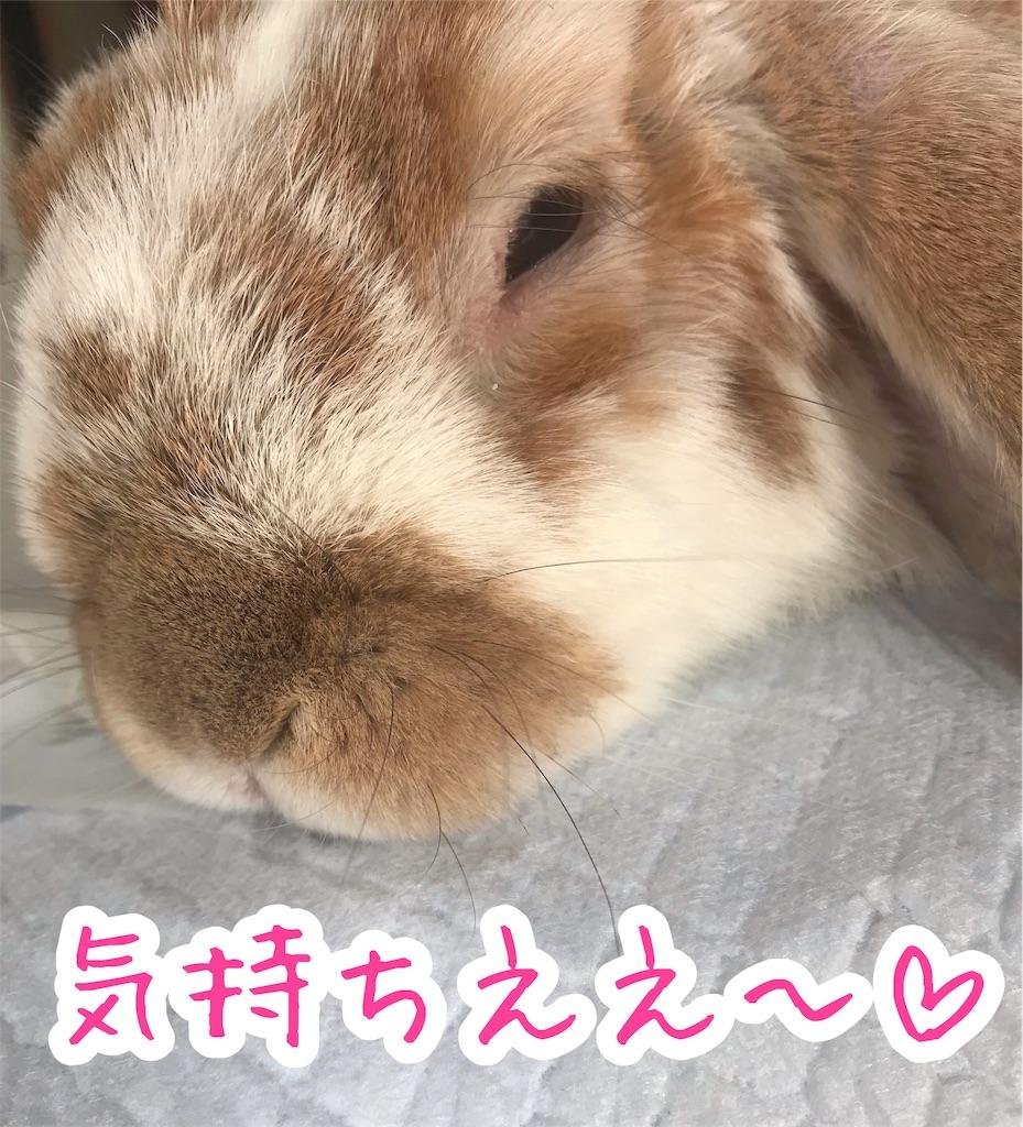 f:id:yurina12:20191204145154j:image:w300