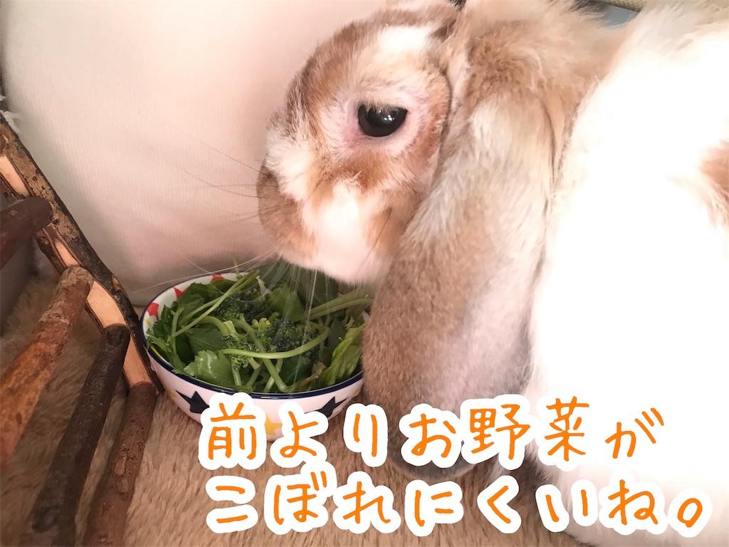f:id:yurina12:20191209123743j:image