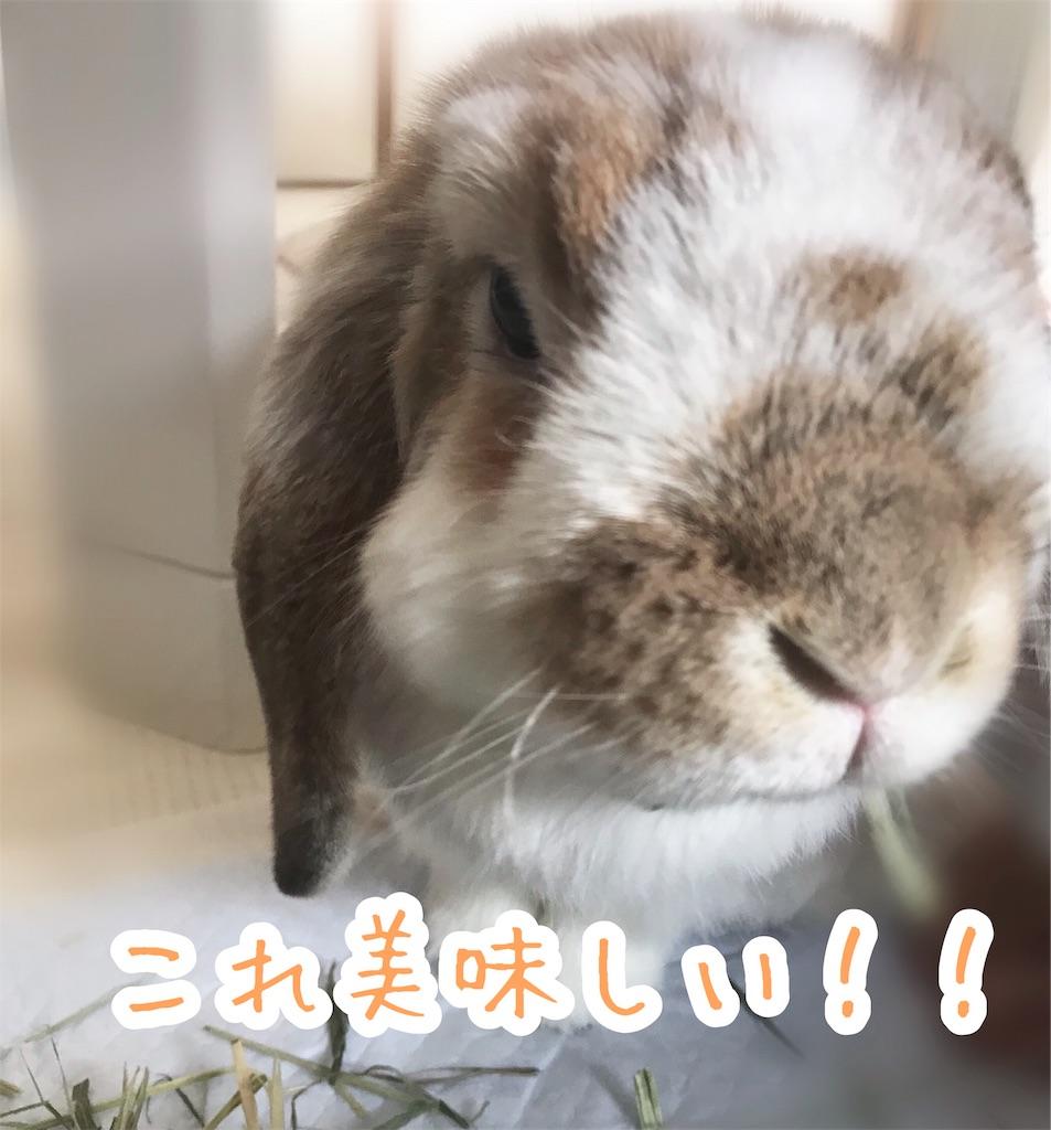 f:id:yurina12:20191211120716j:image