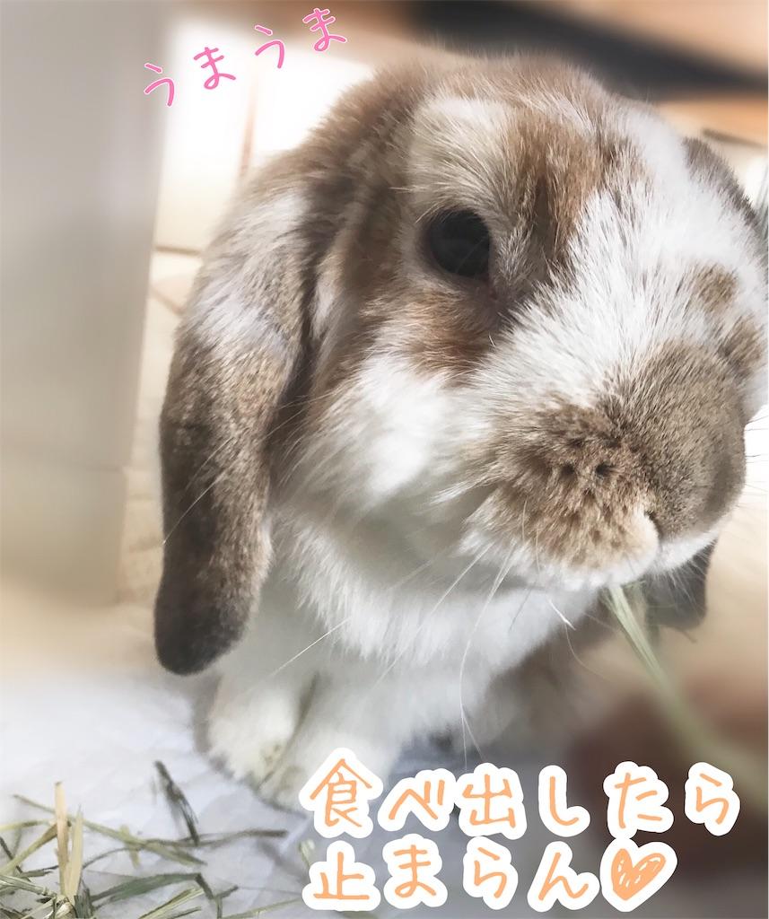 f:id:yurina12:20191211120738j:image