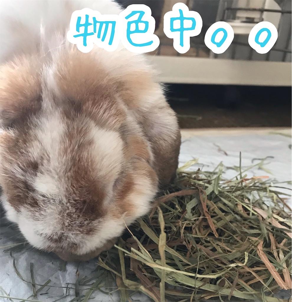 f:id:yurina12:20191211120904j:image