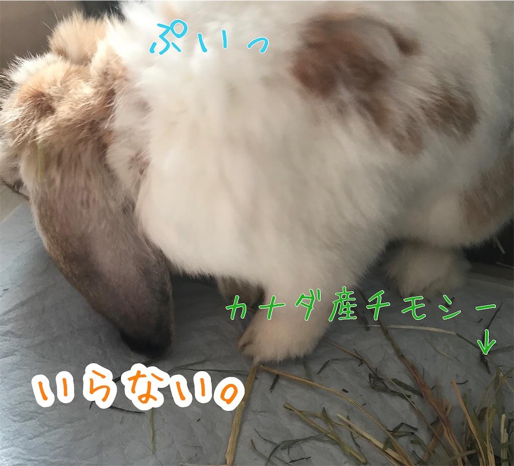 f:id:yurina12:20191211182530j:image