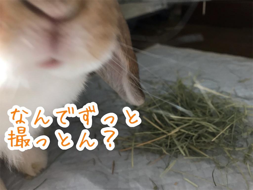 f:id:yurina12:20191211183139j:image