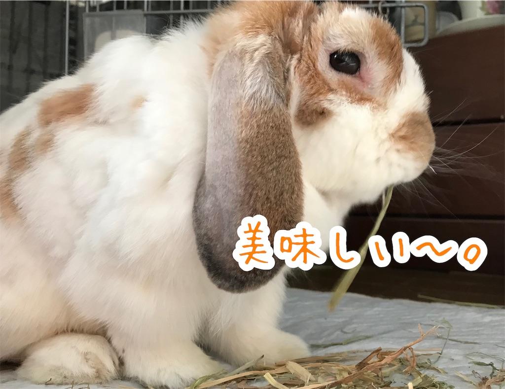 f:id:yurina12:20191211183643j:image