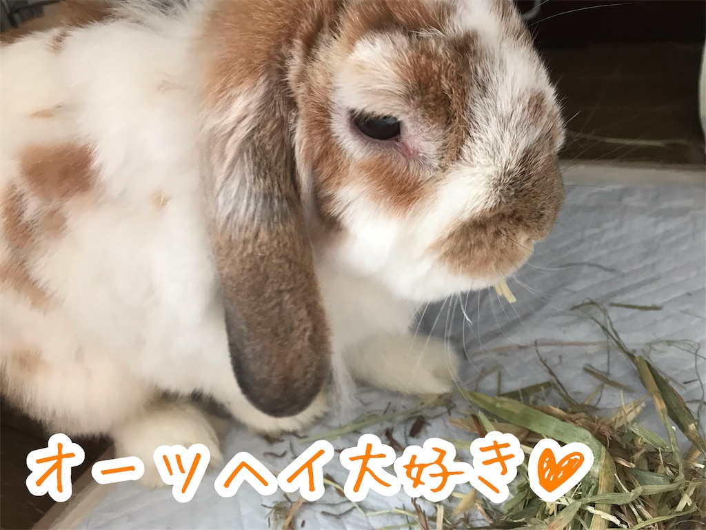 f:id:yurina12:20191211183751j:image
