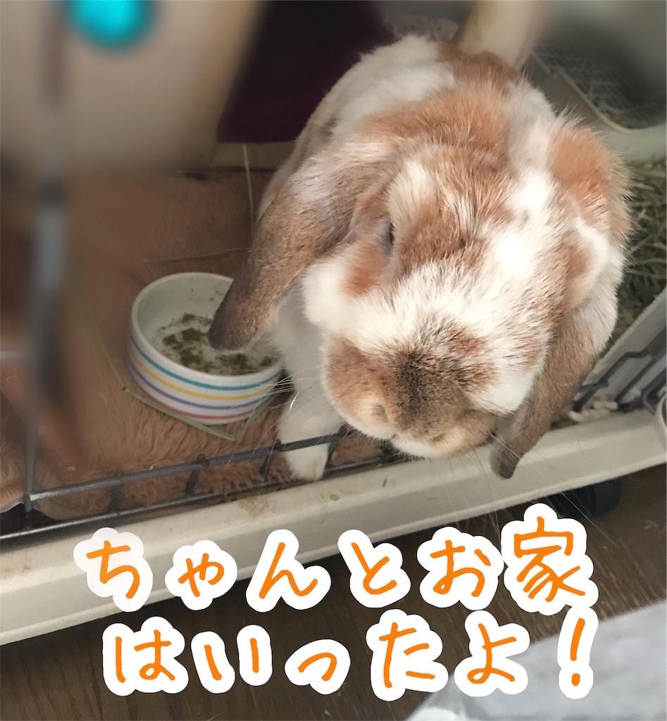 f:id:yurina12:20191211203512j:image