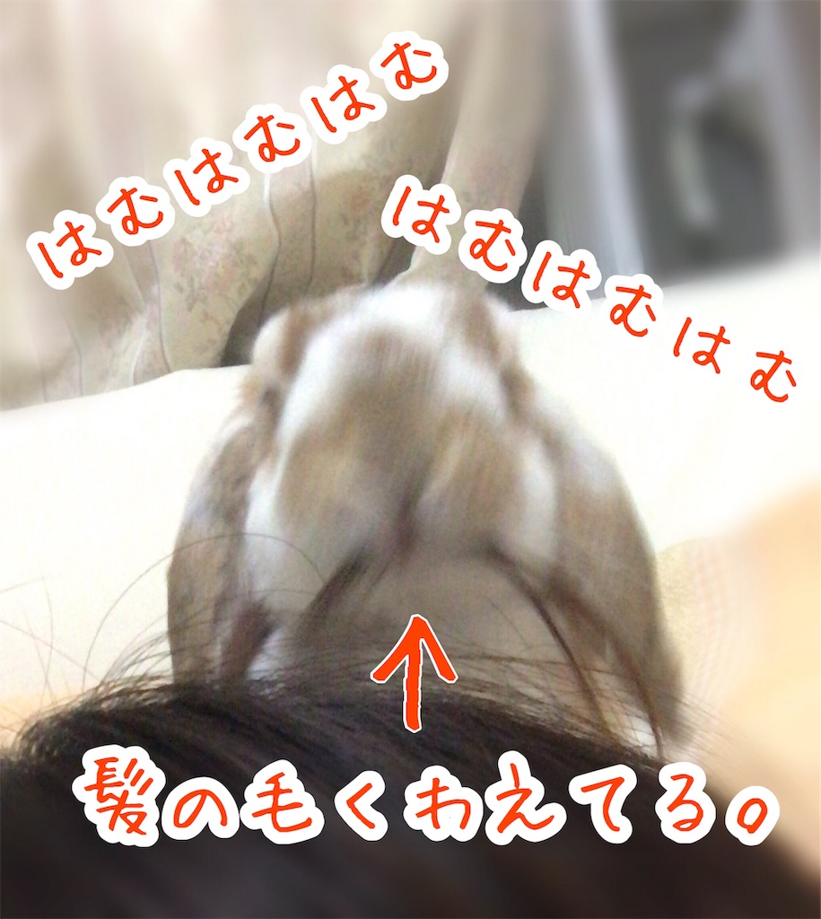 f:id:yurina12:20191220122046j:image