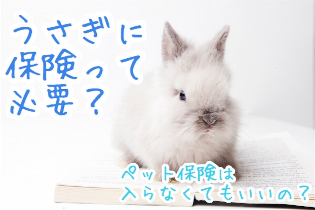f:id:yurina12:20191221130217j:image