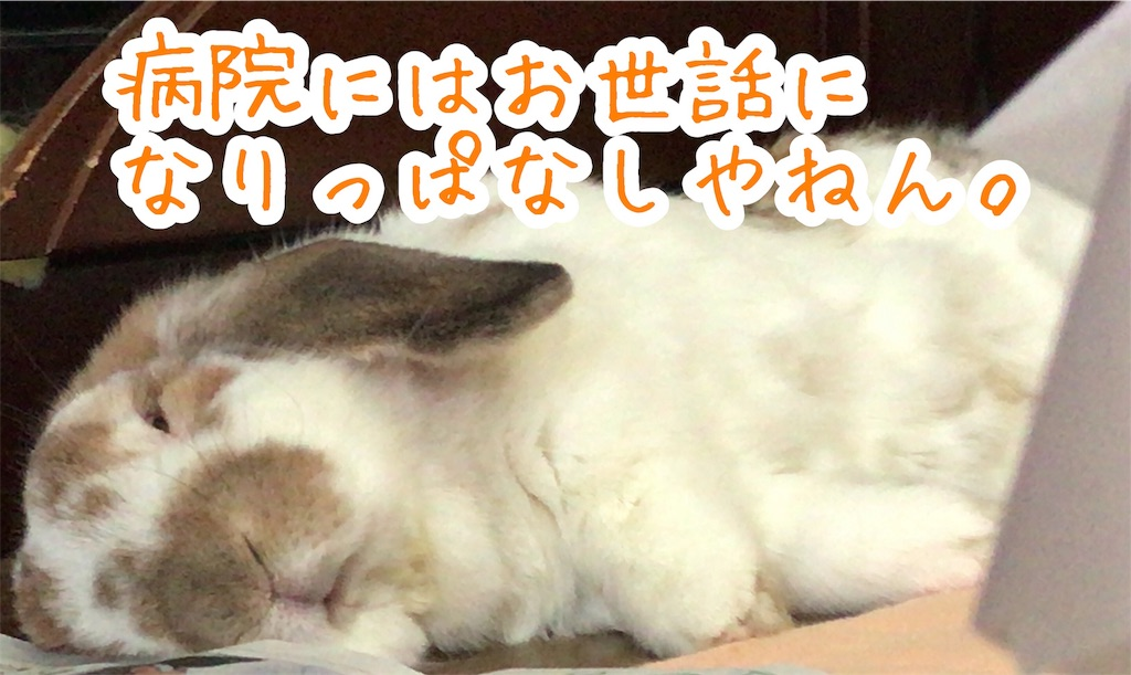f:id:yurina12:20191221135618j:image
