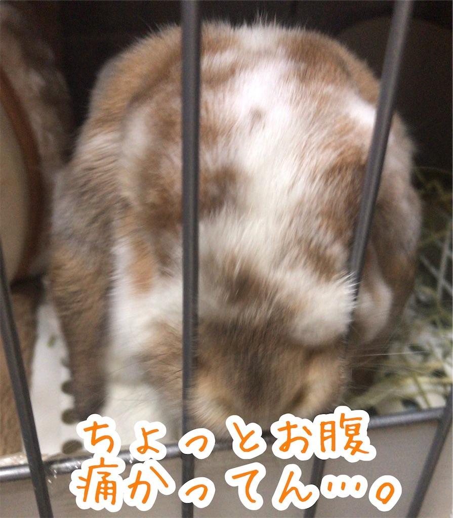 f:id:yurina12:20191221193743j:image