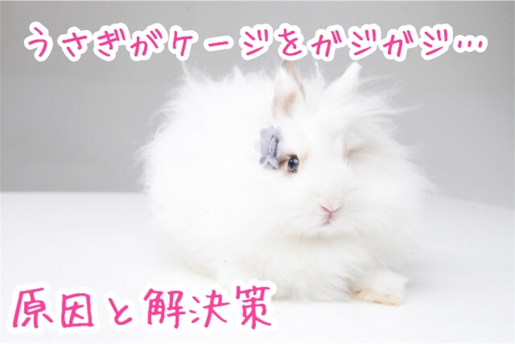 f:id:yurina12:20191225124712j:image