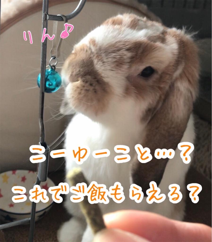 f:id:yurina12:20191227100451j:image