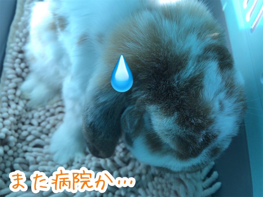 f:id:yurina12:20191228151747j:image