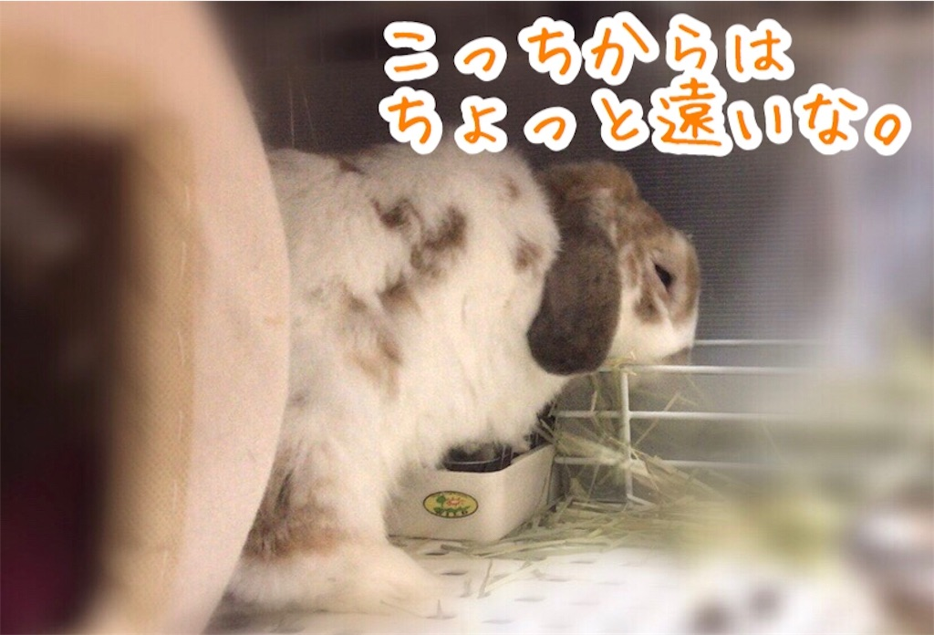 f:id:yurina12:20200108225634j:image