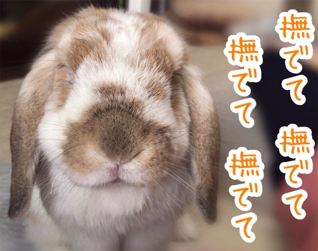 f:id:yurina12:20200108225716j:image