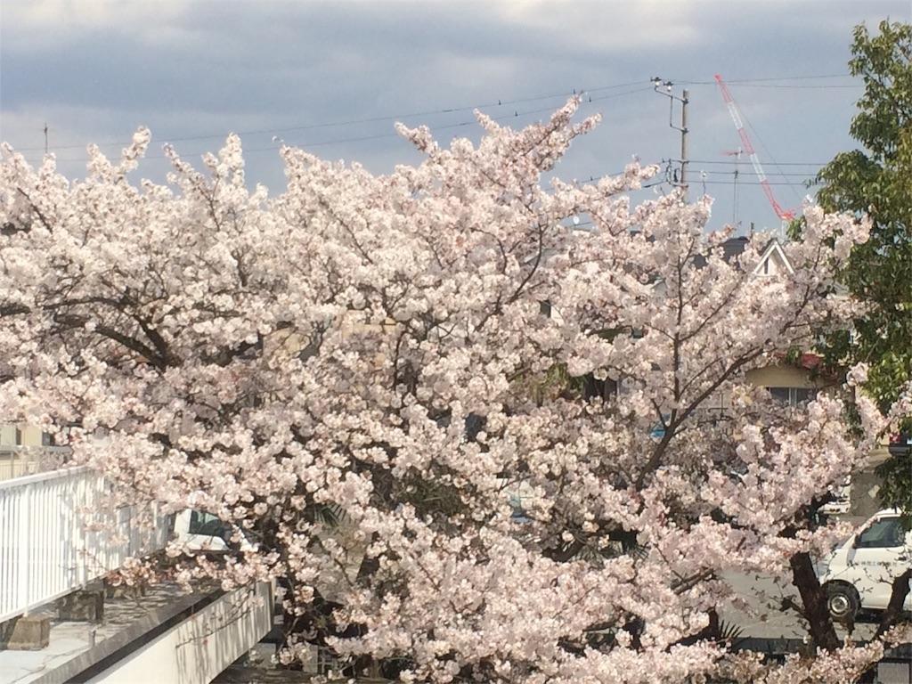 f:id:yuritokazoku:20170413133401j:image