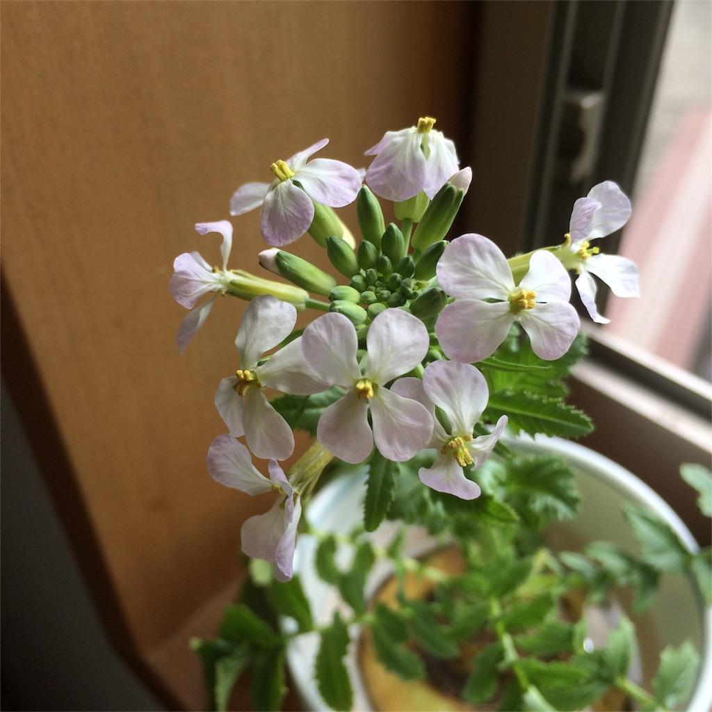 f:id:yuritokazoku:20200429202607j:image