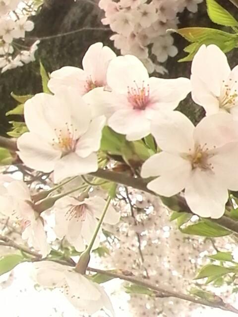 f:id:yuriya2002:20170410231850j:plain